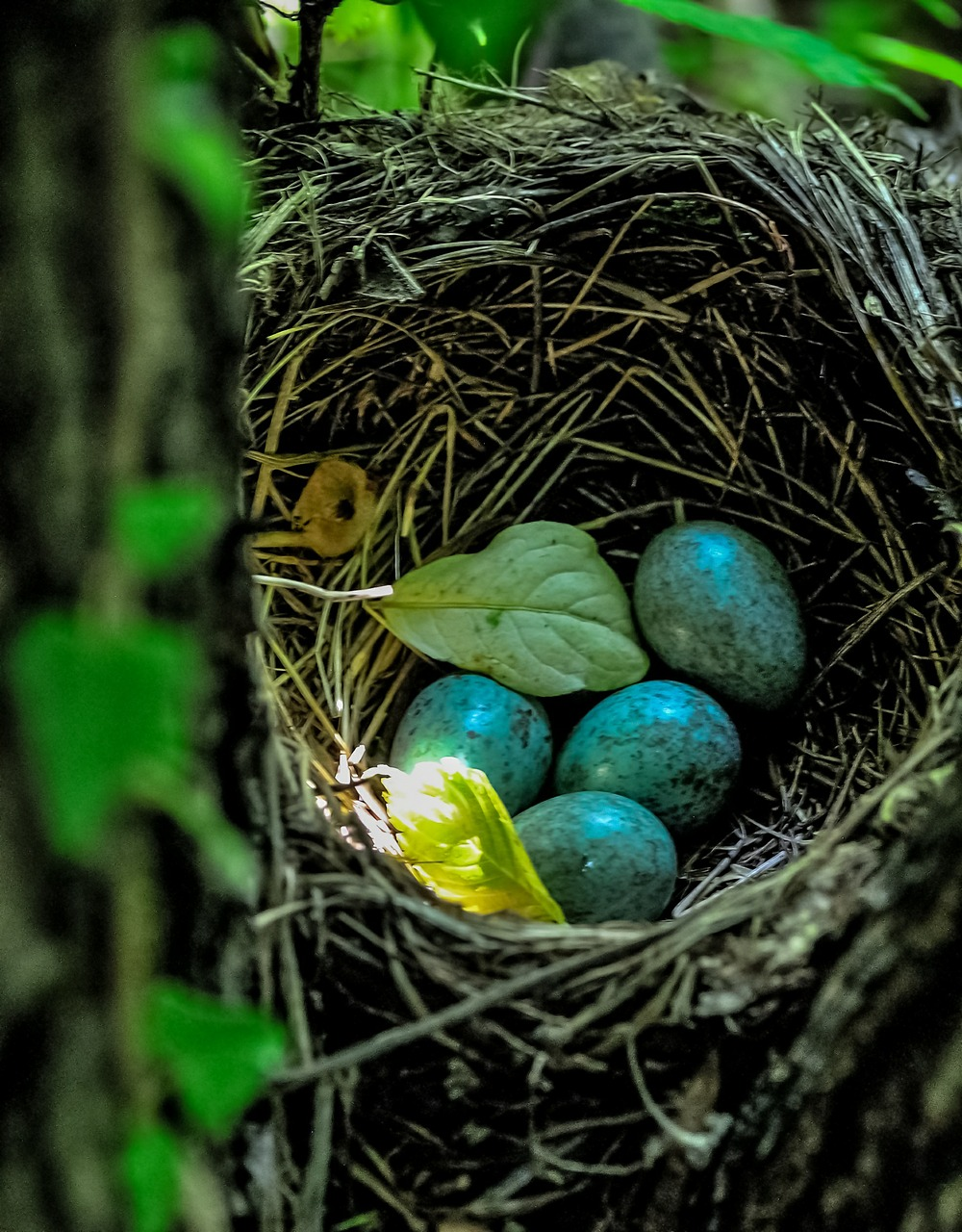 Birds nest blue eggs